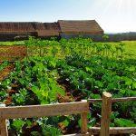 BRA Agroquímica registra novo produto biológico no Brasil