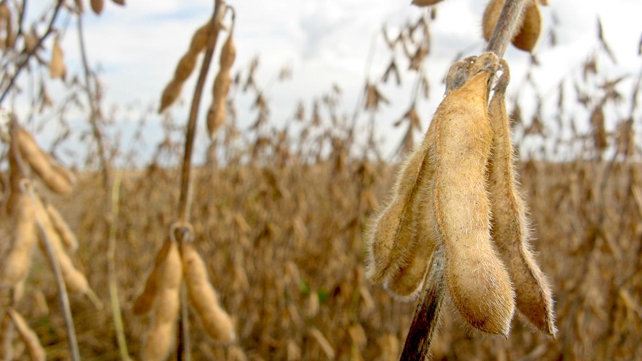Soja pode ser afetada por excesso de chuva no Mato Grosso