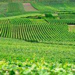 Genes-chave podem adaptar plantas às mudanças climáticas