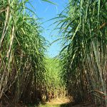 Senado aprova projeto que autoriza venda direta de etanol para postos
