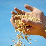 Soja cai ao menor preço em 10 anos